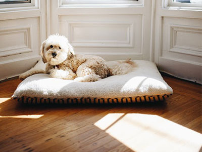 Some tips to keep your pet and their room clean