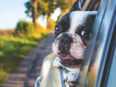 Some tips for traveling with your dog