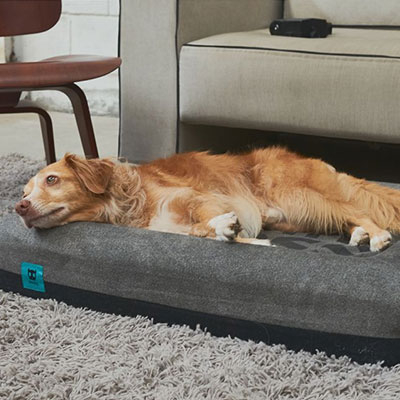 memory-foam-pet-bed.jpg